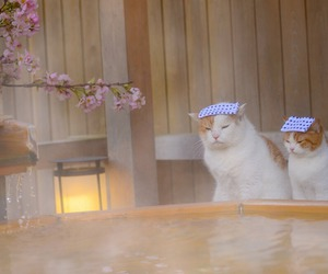 cat, japan, and animal image