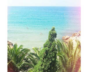 palm, palmtrees, and spain image