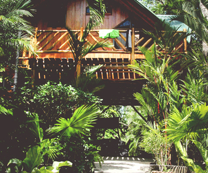 tropical, green, and house image