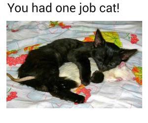 cat, funny, and hahahaha image