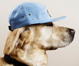 dog, hat, and animal image