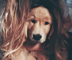 dog, cute, and hair image