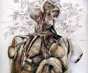 anatomia, anatomy, and human image