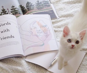 cat, phrases, and white image