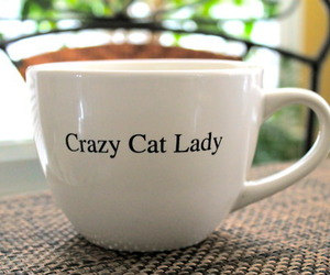 cat, crazy, and cup image