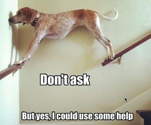 dog, lol, and stairs image
