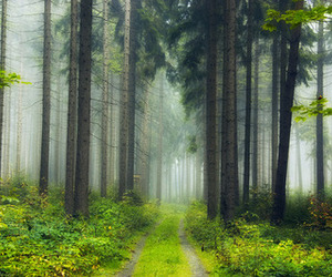 forest, nature, and photography image