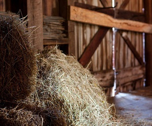 country life and hay image