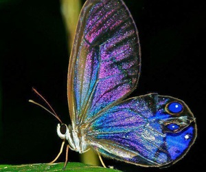 blue, butterfly, and punk image