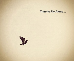 alone, bird, and time to fly alone image