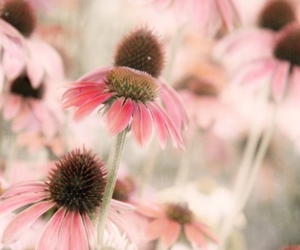 flowers and pink flowers image