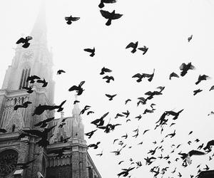 bird, sky, and church image