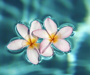 flowers, blossoms, and water image