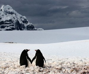 love, penguin, and snow image