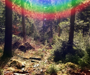 forest, nature, and rainbow image