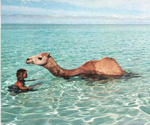 camel, sea, and girl image
