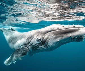 nature, whale, and animal image