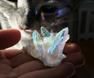 cat, crystal, and animal image