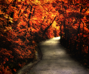 autumn, landscape, and nature image