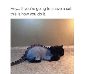 cat, funny, and dinosaur image