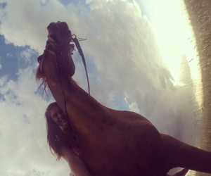 free, horse, and summer image