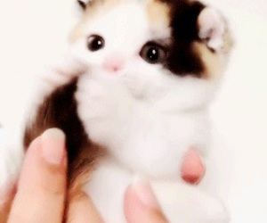 gif, cat, and kitten image