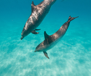 summer, beauty, and dolphin image