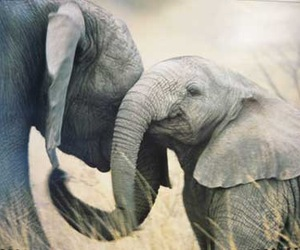 elephant and baby image