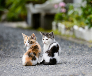 cat, kitten, and animal image