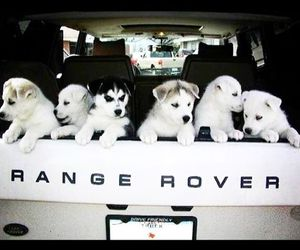 dog, rangerover, and love image