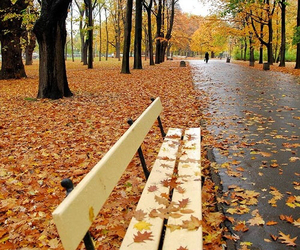 leaves, autumn, and bench image