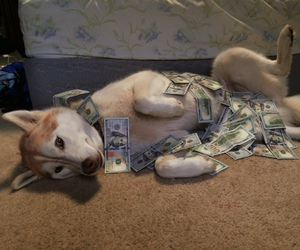 dog, animal, and money image