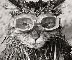 cat, snorkeling, and badass image
