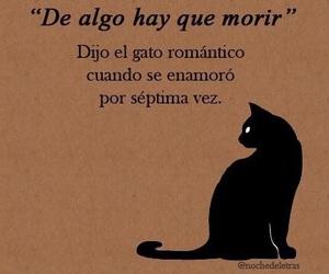 love, gato, and cat image