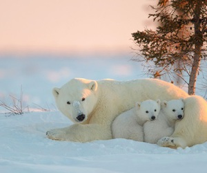 animal, nature, and family image