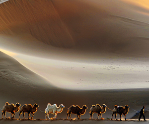 desert, nature, and camel image
