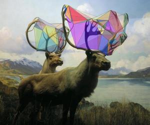 deer, animal, and art image