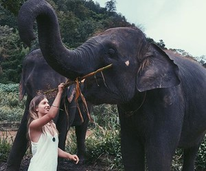 animal, elephant, and nature image