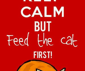 cat, keep calm, and funny image
