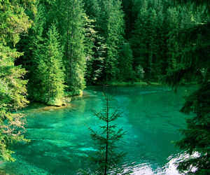 austria, forrest, and lake image