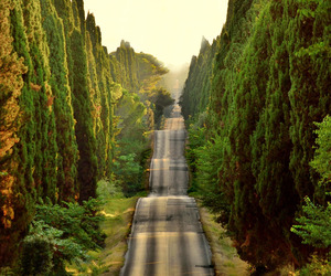 italy, nature, and road image