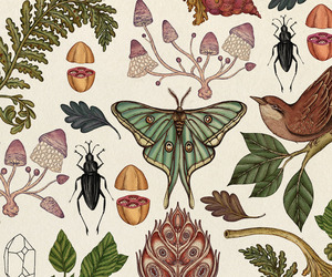 wallpaper, butterfly, and nature image