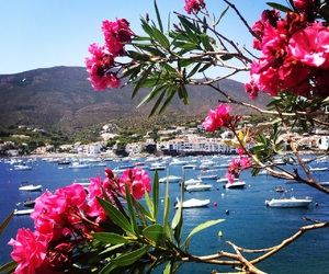 cadaques, europe, and flowers image
