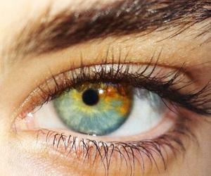 aussie, eye, and amelia zadro image