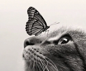 butterfly, cat, and animal image