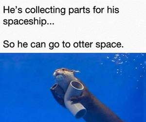 funny, otter, and 😂 image