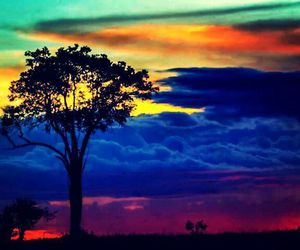 tree, colors, and sky image