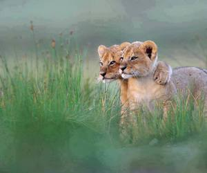 animals, pure love, and puppies image