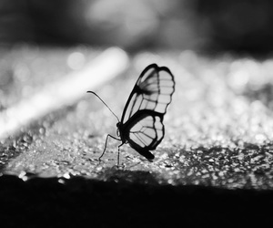black, blackandwhite, and butterfly image
