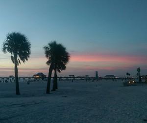 brach, palms, and sky image